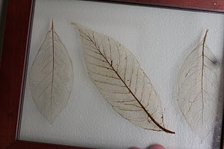DIY leaf skeletons (for gallery wall)