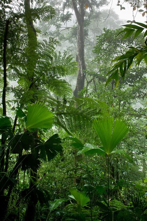 Rainforest along Fortuna River, Costa Rica | Paul Souders, WorldFoto