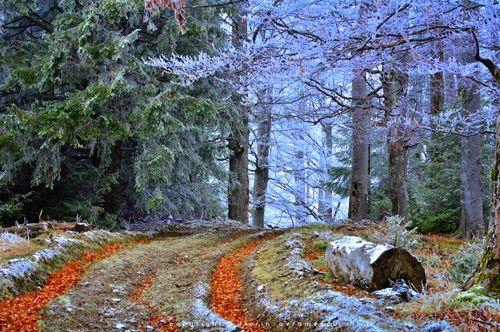 Peisaj de toamna-iarna din banatul Montan