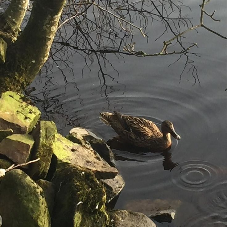 Snapped this #duck. As you do. ;)