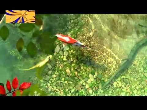 Lina Horne - Koi FishTank Relaxing Japanese Koi