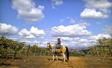 Wine Tasting and 90-Minute Horseback Ride Through Vineyard for One or Two from Vineyard Trail Rides groupon