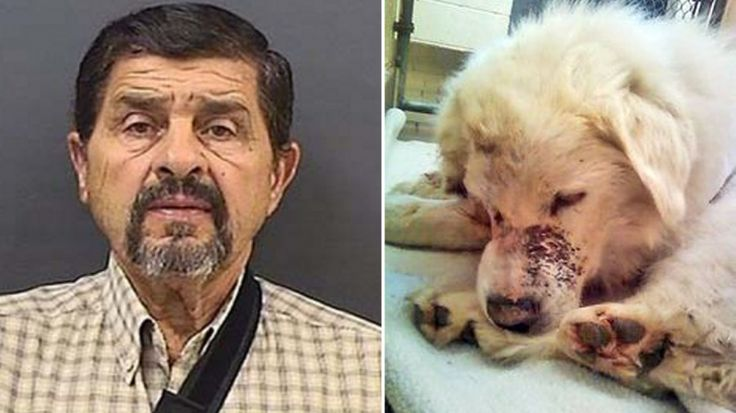 Strictly punish driver that dragged dog behind truck and lied about his injuries! | YouSignAnimals.org