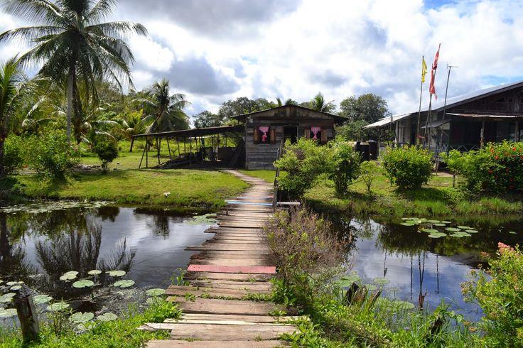 Suriname, Matapica