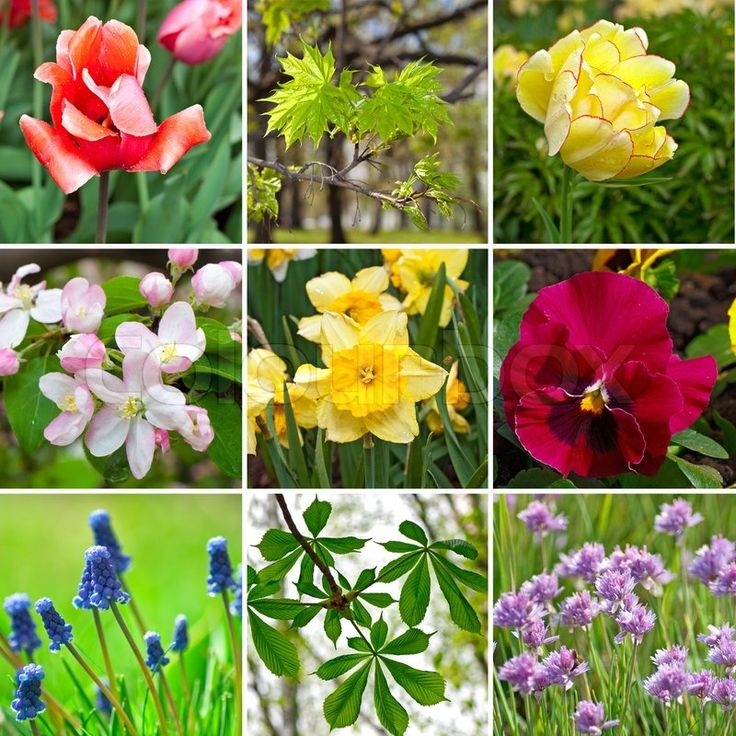Spring colors flowers collage stock photo on Colourbox