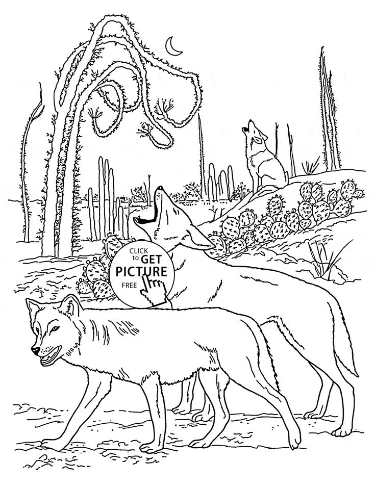 Best 100 Animals coloring pages images on Pinterest Children