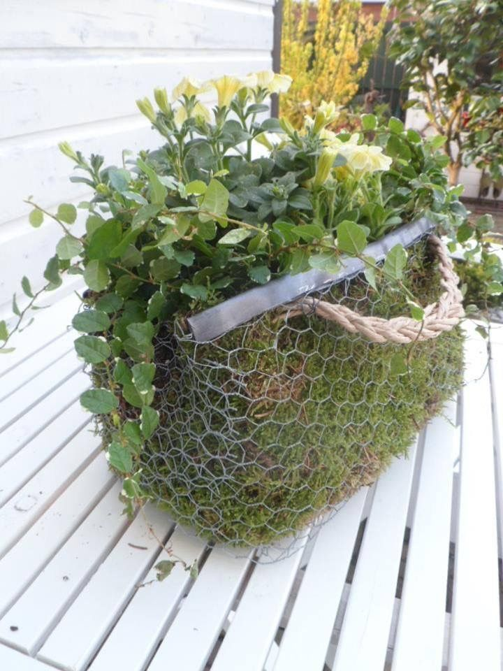 An unusual container which looks as if it is made from chicken wire with a metal edging strip and a rope handle. Line the basket with moss before planting