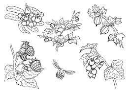 """Képtalálat a következőre: """"őszi gyümölcsök színező"""""""