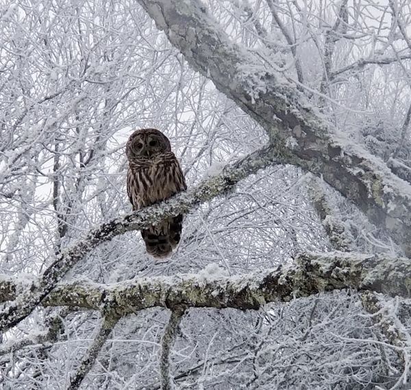 """""""Joannie Benfield sends this beautiful photo. It was taken near Old Beech Mountain Rd Saturday January 15. Thanks!""""  Photo Of The Day for 01-23-18 - raysweather.com"""