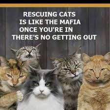 Image result for cat lady patches
