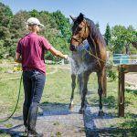 Eko kratka geoSYSTEM to doskonała nawierzchnia na padok koński, do boksów lub na stanowisko czyszczenia koni. Nasza realizacja ze stadniny Fundacji Smolenia.
