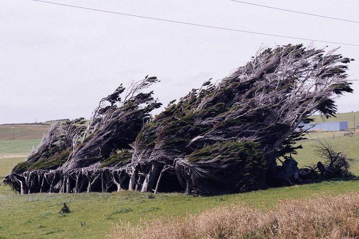 NZ breeze  #nz #newzealand #southisland #island #wind #tree #pure #power #cold #newstyle #wilderness #nature #landscape #beautiful #backpacking #happy #love #trip #adventure #travelling #nofilter #photografy #naturelovers #love #wanderlust #instatravel #instagood #instadaily #lonelyplanet #worldtravelpics
