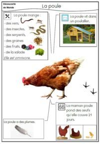 La poule *3* Plus