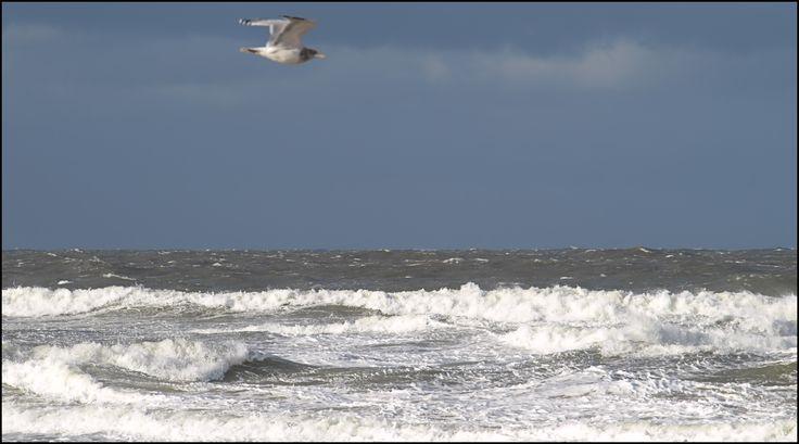 Beach Julianadorp, 22-10-'14