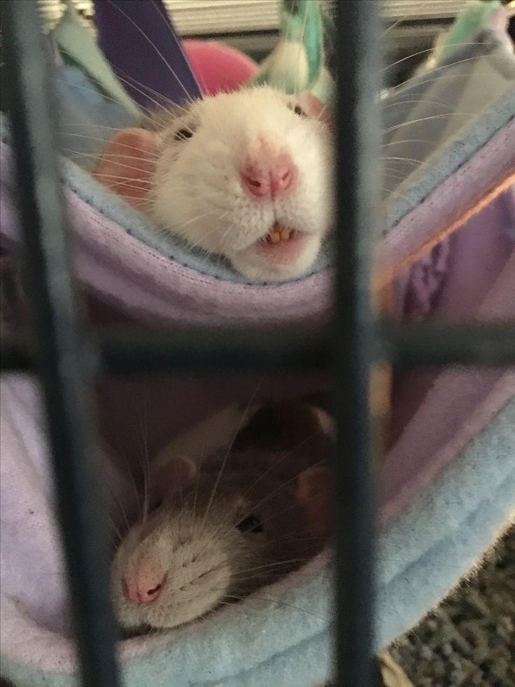 Pepina en Aafje