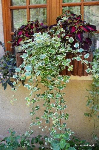 Les 25 meilleures id es concernant plantes retombantes sur for Plantes jardiniere plein soleil
