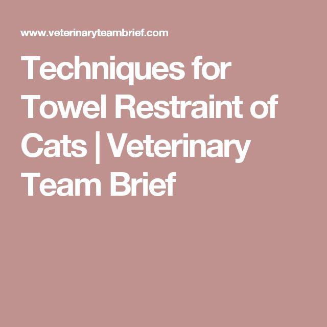288 best Veterinary Nursing \/ Studying images on Pinterest Cats - equine veterinary nurse sample resume