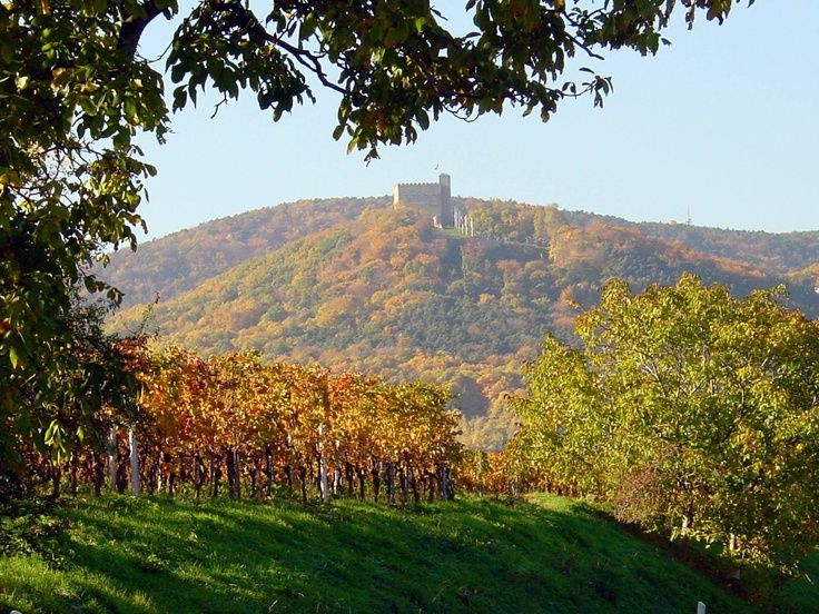blowjob in der sonne Kaub(Rhineland-Palatinate)