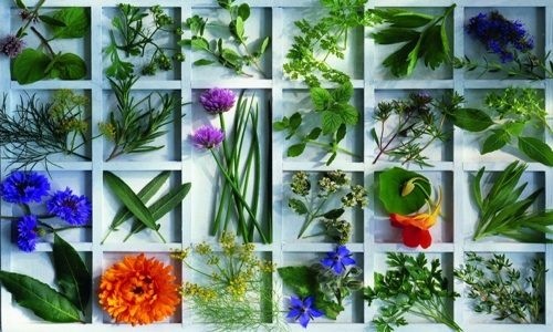 Les 469 meilleures images du tableau jardinons jardinez - Comment tailler la menthe ...