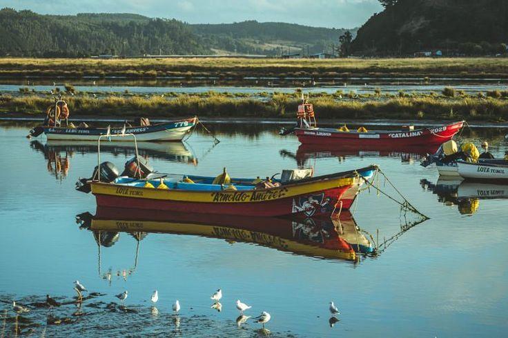 Cuando visité Tubul me sorprendieron sus caudales atrapados en juncos y maleza. Formando pequeños canales que ayudan a los pescadores a fondear los botes durante la noche. / TAGS #photo #photos #pic #pics #picture #pictures #snapshot #art #beautiful #instagood #picoftheday #photooftheday #color #all_shots #exposure #composition #focus #capture #moment #arauco #lota #chile
