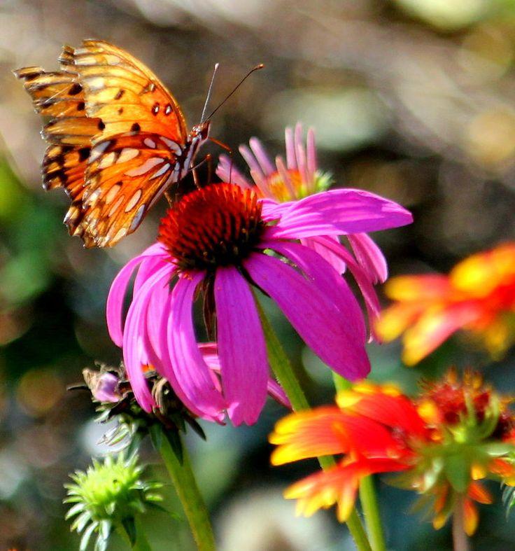 Fall Butterfly