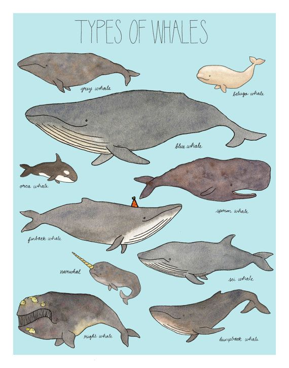 Types of Whales print16x20 with baby blue by EllenBurchArt on Etsy, $55.00
