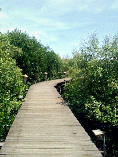 #mangrove - Probolinggo, East Java, Indonesia
