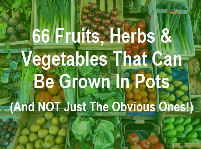 66 Fruit Vegetables Herbs That Can Be Grown In Pots