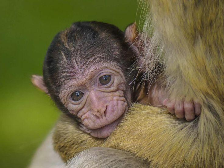Affenbaby im Tierpark Rheine