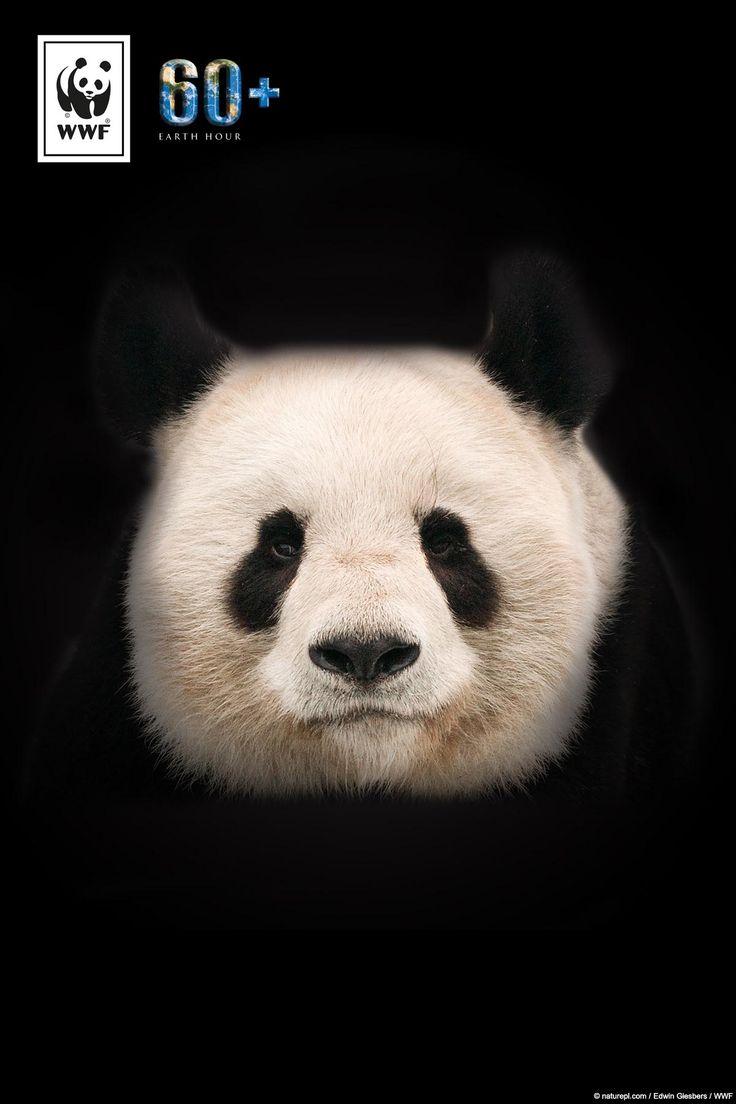 Wusstet ihr, dass der Panda schon bald kein Futter mehr finden könnte?  Eine von sechs Tierarten ist durch den Klimawandel vom Aussterben bedroht. Macht mit bei der #EarthHour und setzt ein Zeichen für mehr Klimaschutz. Denn Klimaschutz ist Artenschutz!