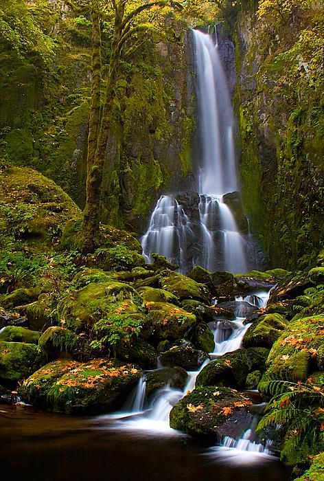 Lower Kentucky Falls ~ Siuslaw National Forest, Oregon ...