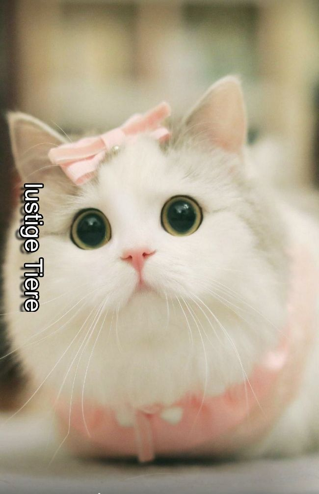 So Cuteness 3 Cute Wallpapers Pinterest Cute Animals Cute