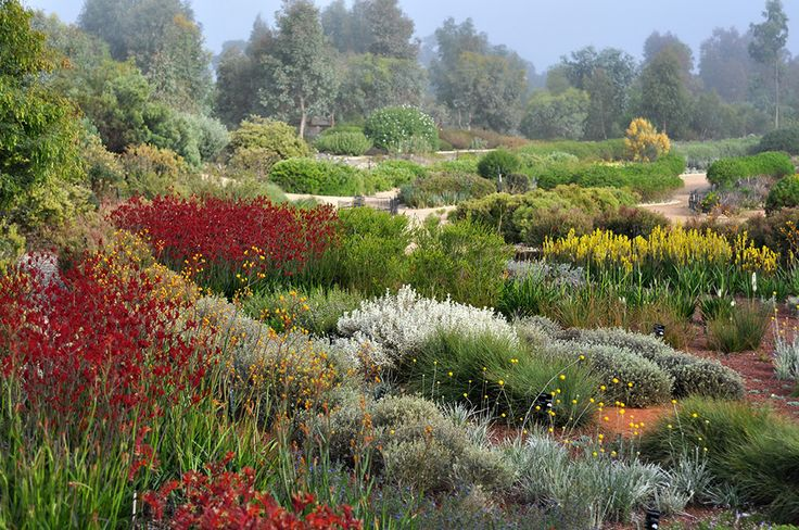 The-Australian-Garden-by-Taylor-Cullity-Lethlean-and-Paul-Thompson-15 « Landscape Architecture Works | Landezine