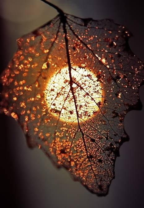 Although it is old and no longer serves its it purpose is beautiful still and therefore has a new and different purpose - Crystal .. remember you are always important no matter what.