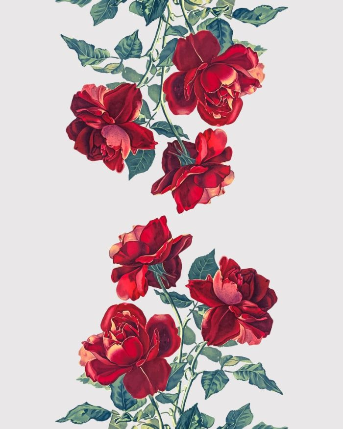 Best 20+ Rose illustration ideas on Pinterest | Rose design, How ...