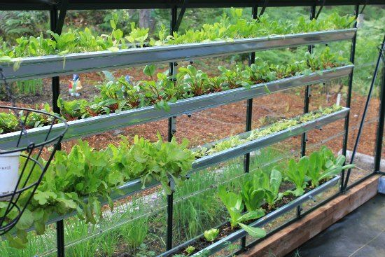 Greenhouse gardening in gutters