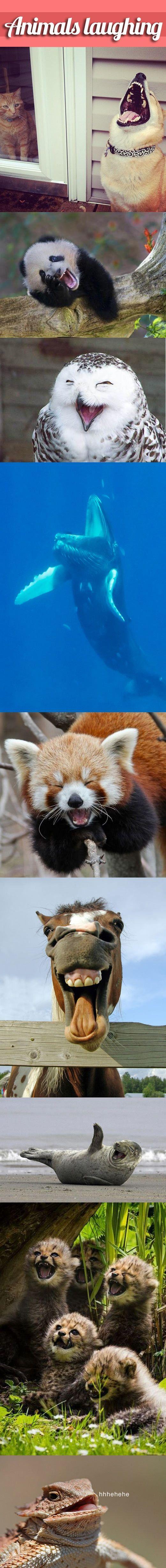 Animals laughing - Imgur