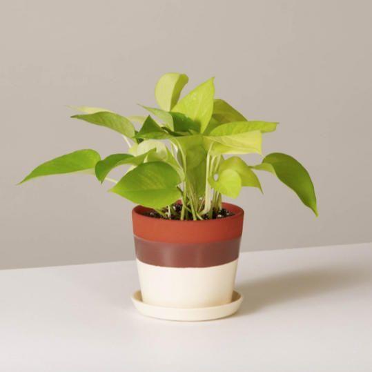 Zimmerpflanzen 20 leichte Zimmerpflanzen, die auch Anfänger nicht töten können