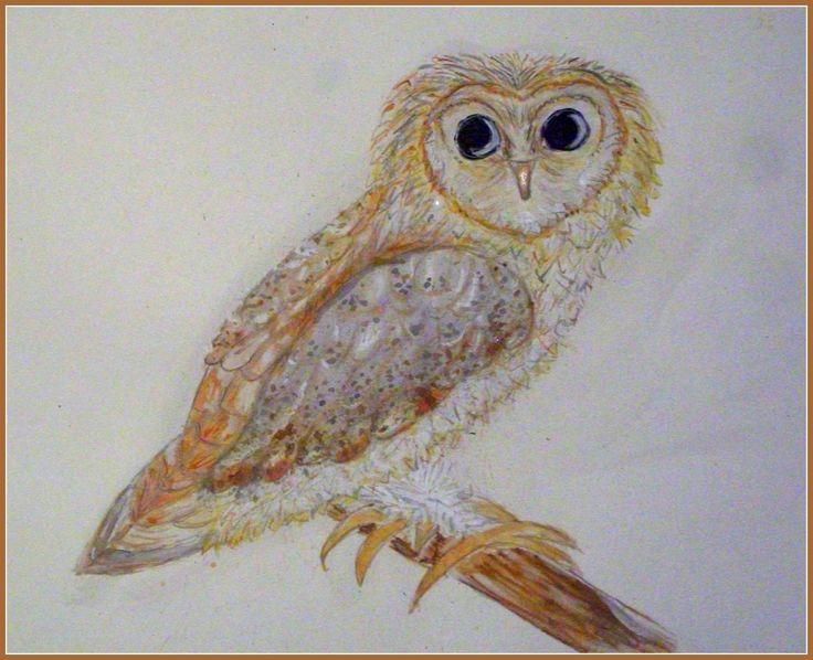 Borris the barn owl
