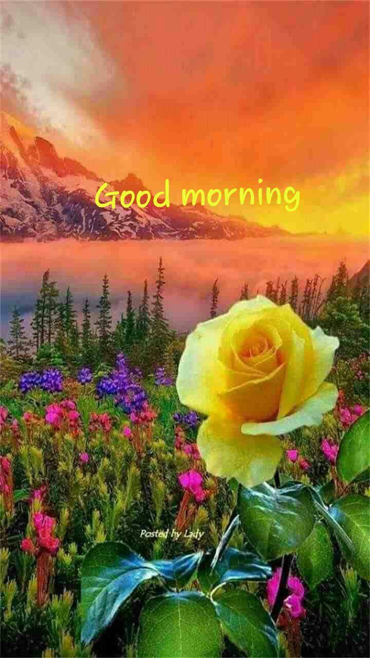 Pin By Sutapa Sengupta On Good Morning Beautiful Flowers Beautiful Nature Beautiful Places Nature