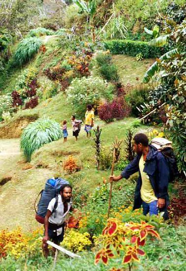 Within the Morobe Province is the Black Cat Track. This track is one that is a little less travelled and is not for the faint-hearted. At 61km long, this track is shorter then the Kokoda Track, although it is renowned for being more challenging. http://www.pagahillestate.com/visiting-morobe-province/