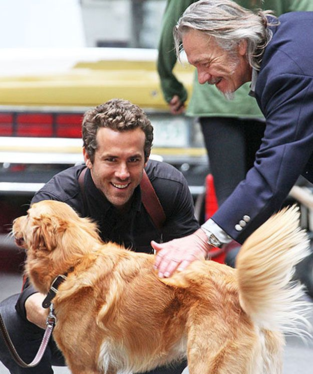 Baxter (Adopted by Ryan Reynolds) | 20 Celebs And Their Adorable Adopted Pups