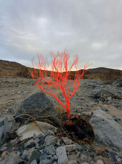"Cristopher  Somewhere in this composition I hear Andy Goldsworthy whispering.  K.W.  ""Burning Bush""...."