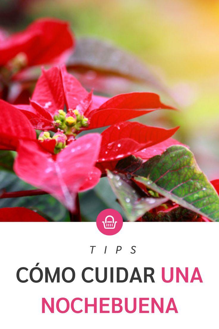 Todo lo que debes saber para tener una nochebuena hermosa para navidad Pink, Wellness, Magick, Plants