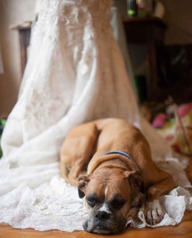 This one who's having a hard time letting go: | 21 Impossibly Adorable Wedding Day Dogs