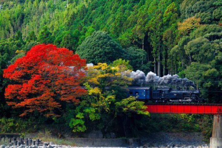 蒸気機関車が走る大井川鉄道に乗って♪紅葉・温泉・お弁当の日帰り旅行♡ | ギャザリー