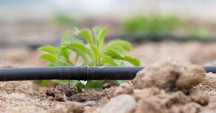 Blogartikel - Tröpfchenbewässerung: Hocheffiziente Bewässerung, nicht nur für aride Regionen