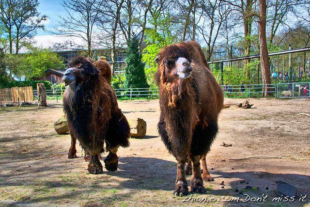 Happy Camels https://zhianjo.com/