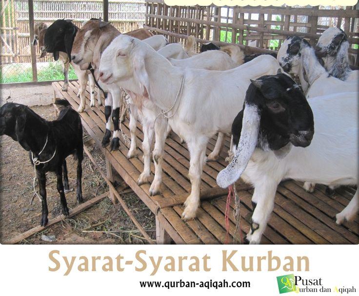 Syarat-Syarat Kurban