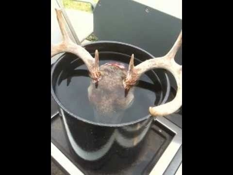 You just shot a beautiful buck and you'd like to add his skull to your wall of trophies. If you're looking to mount the deer skull in the European style, take a look at this walkthrough and learn how to prepare the skull through boiling, degreasing, and bleaching.